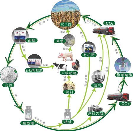 沼气池能源结构